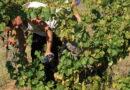 Un ouvrier viticole tombe dans une cuve